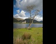 Kilchurn and Single Tree copy