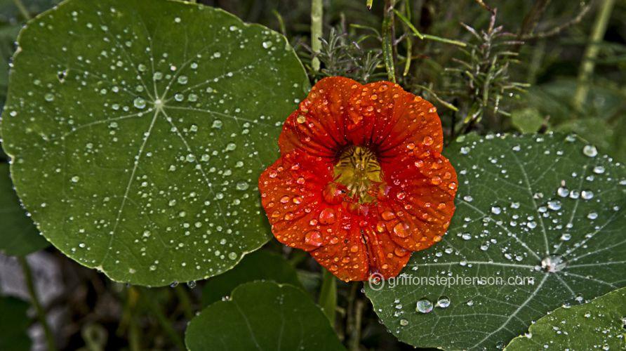 Flane Rain Drop